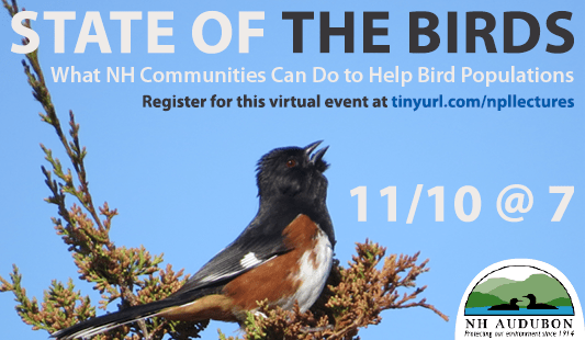 State of the Birds: What New Hsmpshire communities can do to help bird populations. Register for this virtual event at tinyurl.com/npllectures. November 10 at 7 pm. cosponsored by New Hampshire Audubon. Photo of an Eastern towhee bird.