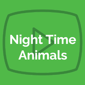 Night Time Animals 10/26