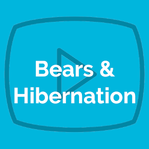 Bears & Hibernation 12/14