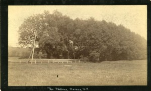 The Willows-Amherst Road