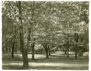 Greeley Park ?